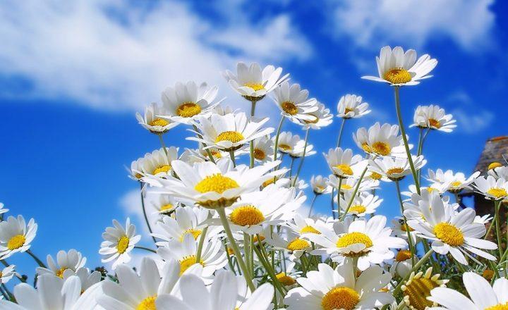 Risultati immagini per PENSIERO POSITIVO Pensa positivo e vivi felicemente nell'abbondanza e nella prosperità